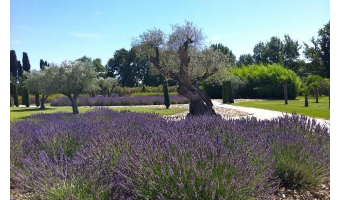 Saint Remy de Provence luxury villa rentals with private pool & staff chef