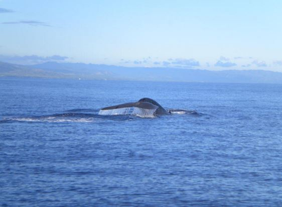 Philippines Tour Pamilacan Island Dolphin and Whale