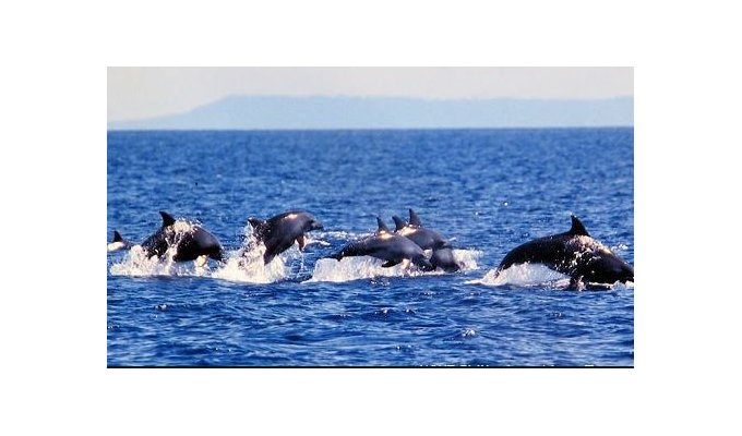 Philippines tour pamilacan island dolphin whale balicasag for 66180 1