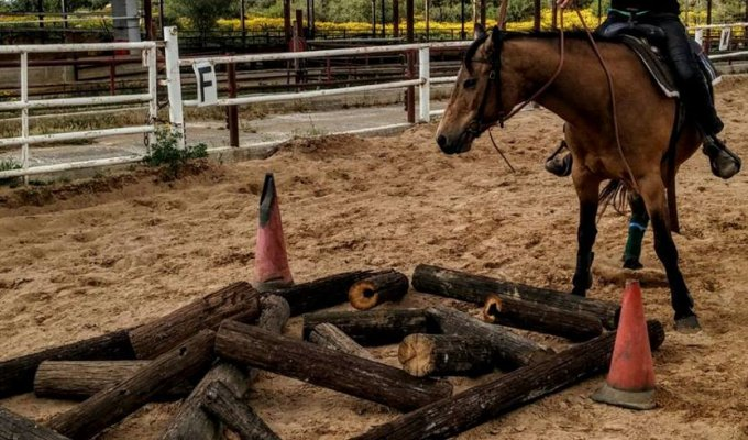 Israel Activities Discover Horse Farm Tours Western Galilee